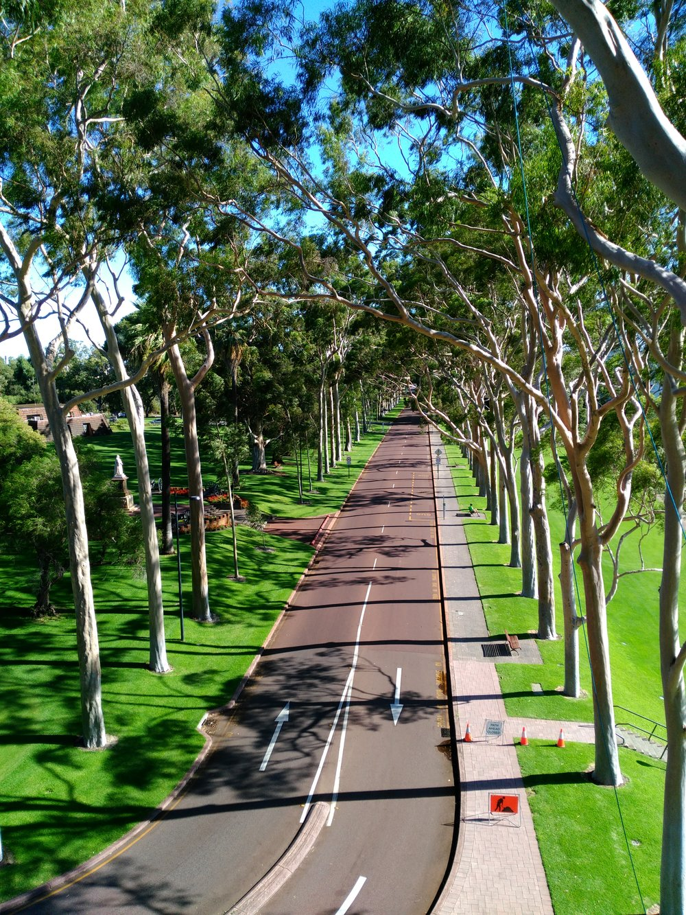 Fraser Avenue Lemon Scented Gums