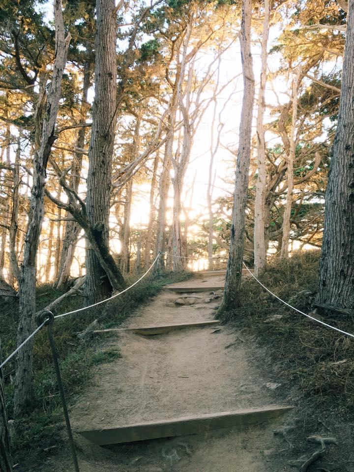tree path_LoanKVu.jpg