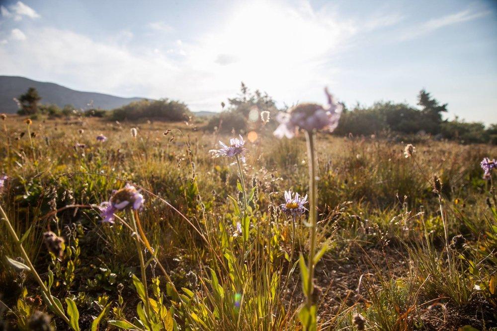 Wildflowers_MelW.jpg