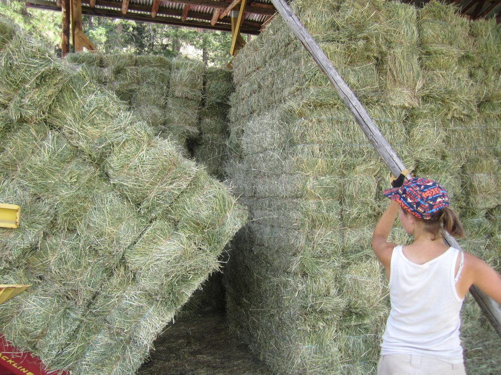 haying 2012 018.JPG