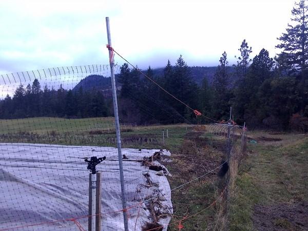 fencing (Small).jpg