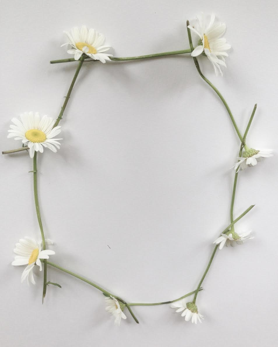 Daisy Chain, June 2017.