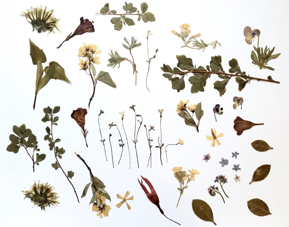 Pressed Flowers found in my childhood flower press from almost 20 years ago!