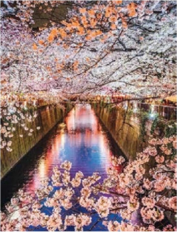 Japan-CherryBlossom-Virtuoso-Travel-TWT.png