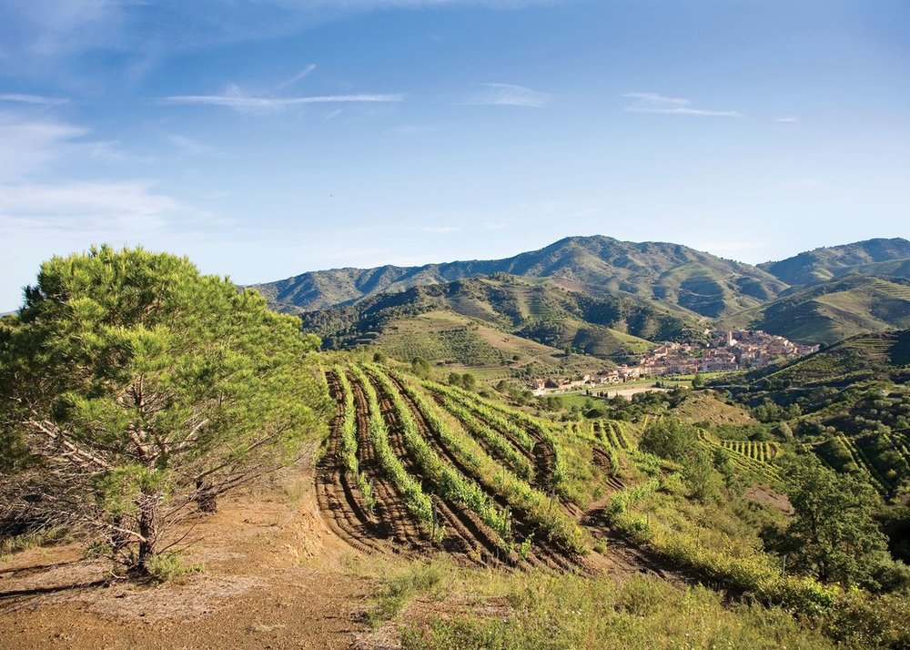 Vineyards near the Costa Daurada in Priorat, Spain.    Photo by Tim E. White/Alamy