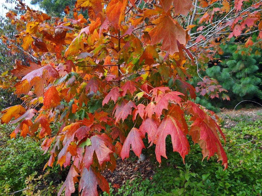 autumn---dsc02603_10322730913_o.jpg