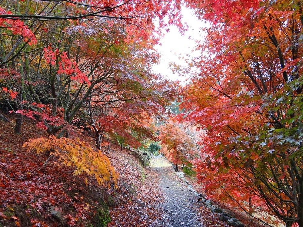autumn---dsc03065_10322657073_o.jpg