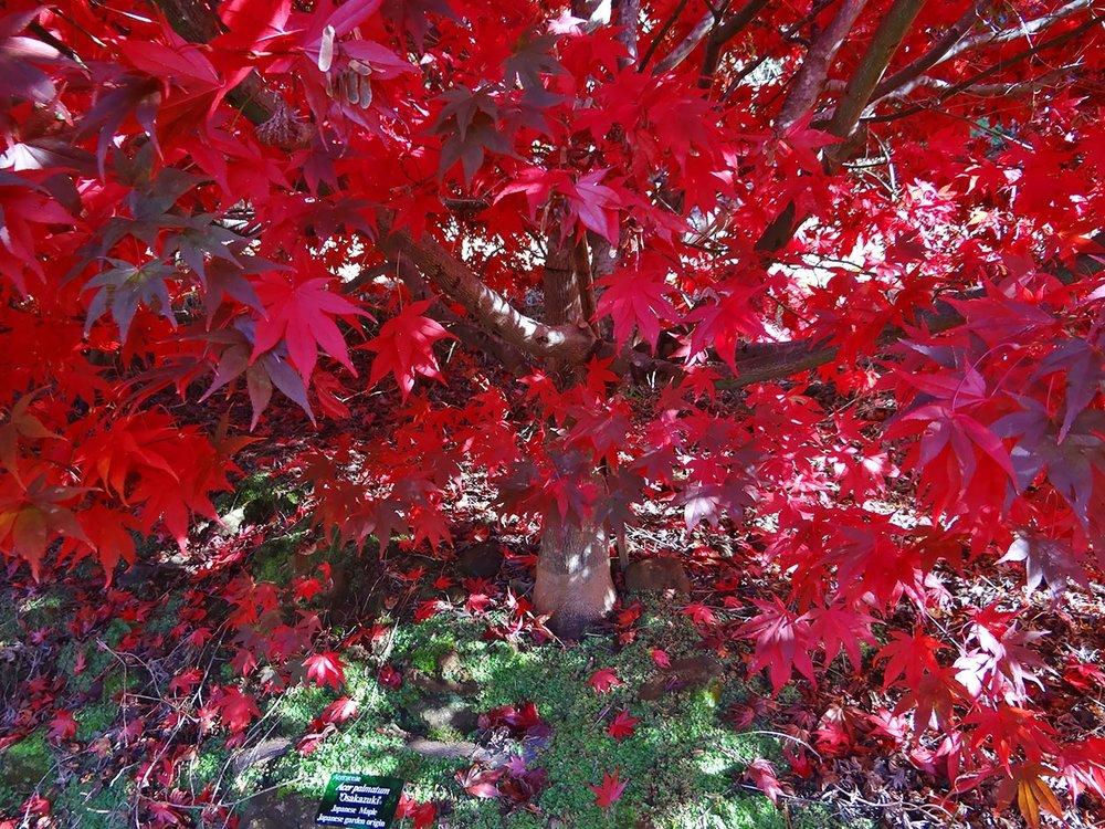 autumn---dsc03121_10322429086_o.jpg