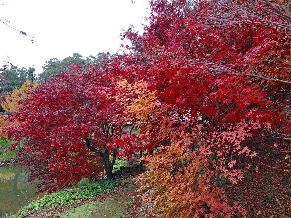 autumn---dsc03209_10322413686_o.jpg