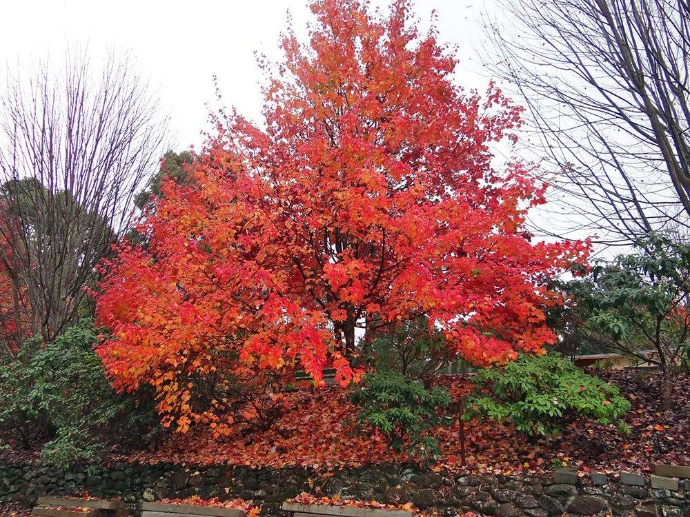 autumn---dsc06878_10322788483_o.jpg