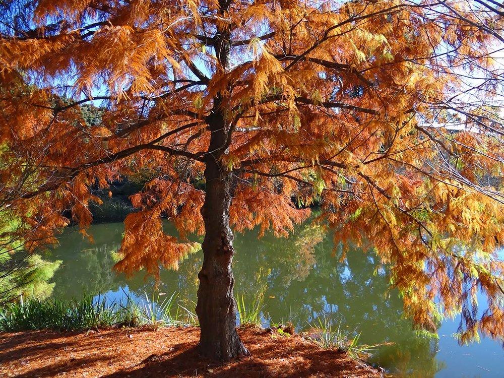 autumn---dsc06956_10322621186_o.jpg