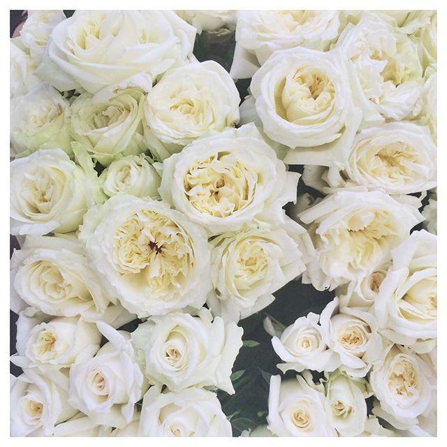 Crisp white roses to brighten up this rainy Melbourne morning 〰