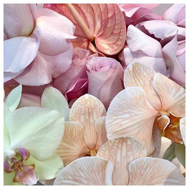 Pink & Peach 〰