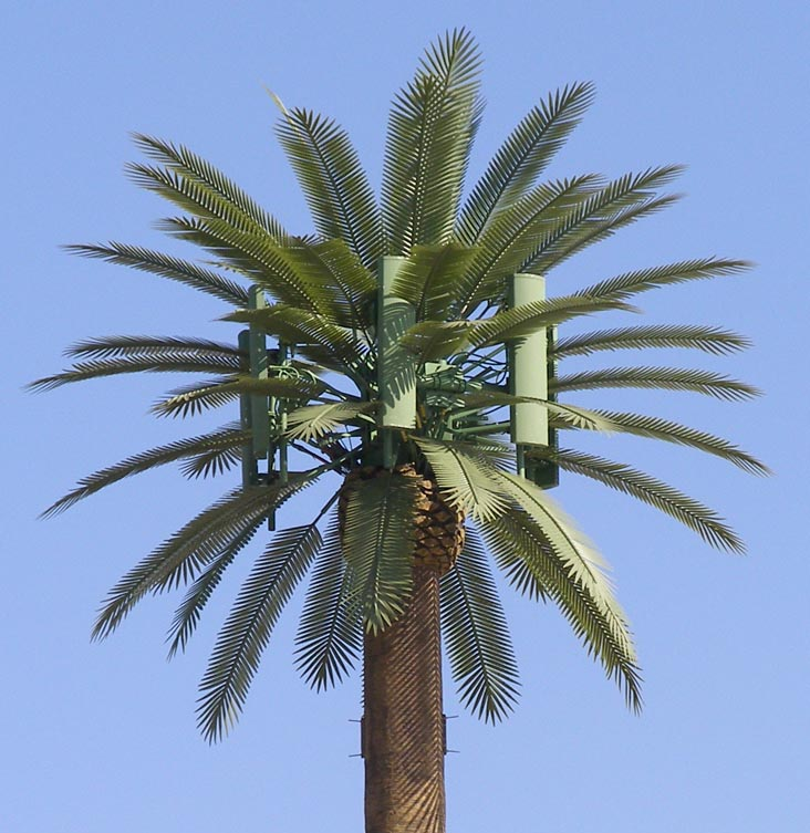 A cell tower disguised as a palm tree emits continuous radiation.