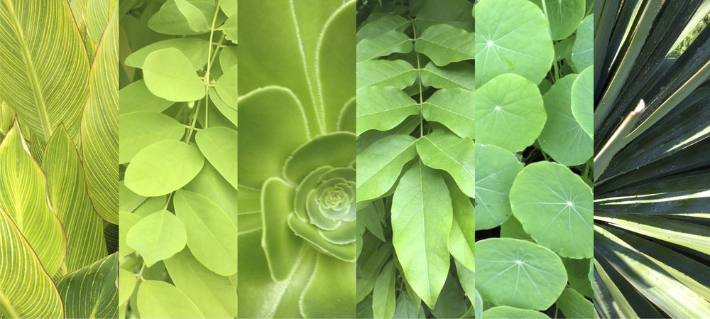 Lush foliage, the inspiration for Pantone's 2017 Colour of the Year, Greenery.