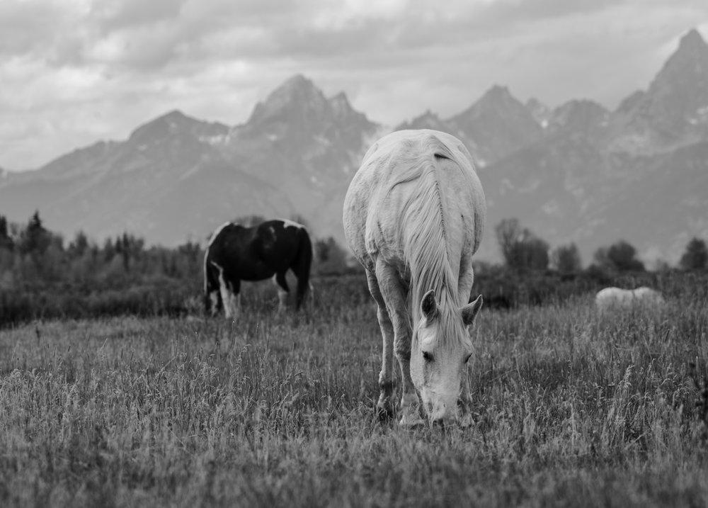 tetons horse.jpg