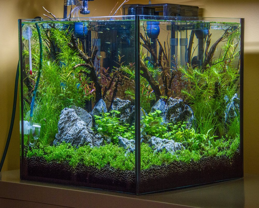 "Just what its name implies. The focus, of course, is on planted nano tanks (small tanks, usually under 10 gallons). There is some overlap with ""Sunken Gardens"", but the emphasis is on small tanks."