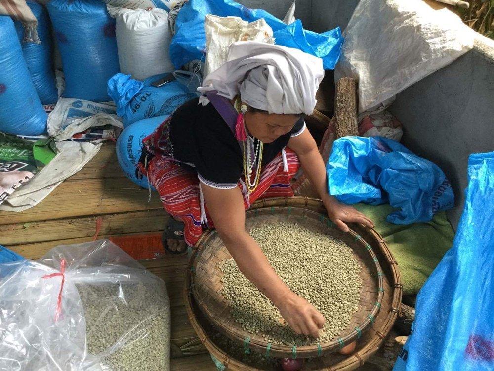 Screening & sorting green coffee in Ban Klang Luang.