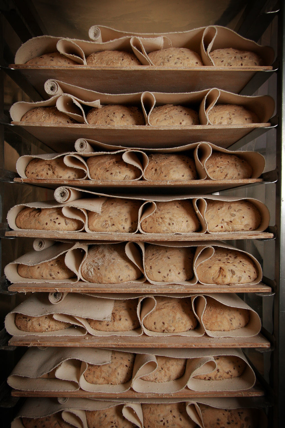 Grain Loaves proving