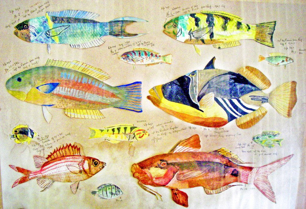 The Fish Pictures