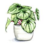 Icon_Pflanze Illustration