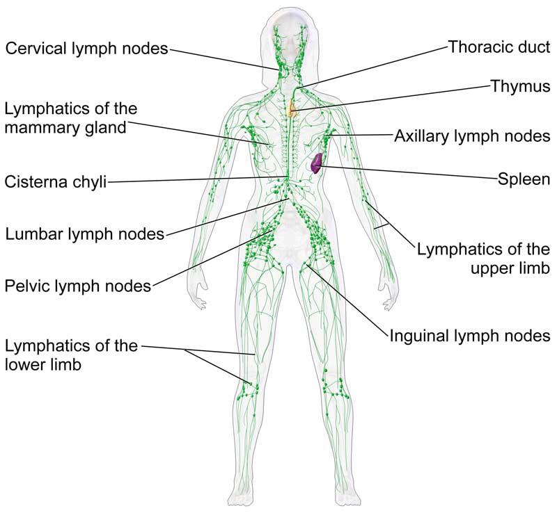 9. Detox Your Lymph
