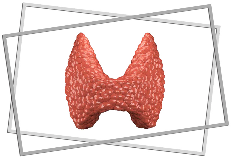 a closeup picture of a thyroid gland - how much do you understand about thyroid health?
