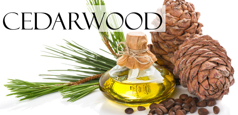 a cedarwood oil diffuser with two pine cones