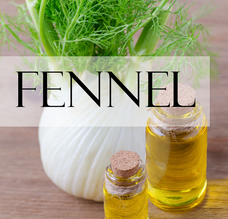 two vials of fennel essential oil in front of a fennel plant