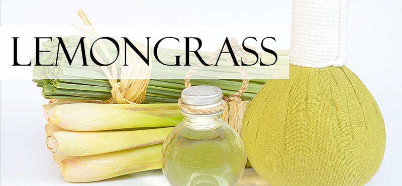 a jar of lemongrass essential oil and an oil diffuser and several stalks of lemongrass
