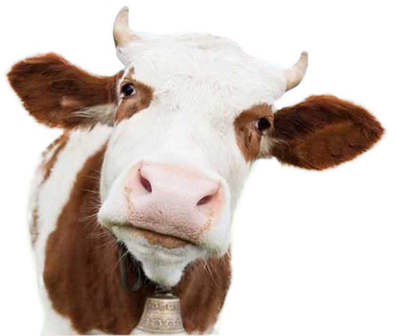 london nutritional therapist tracy tredoux investigates the risks and benefits of including dairy in your diet