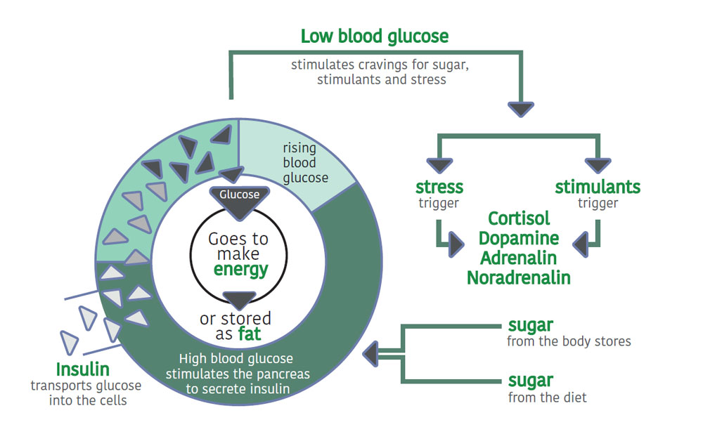 how blood glucose functions within the body