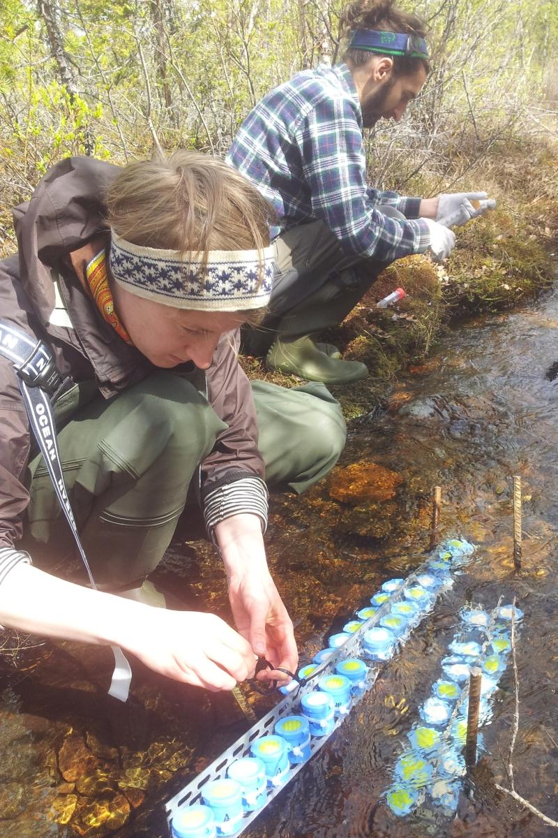 Maria Myrstener summer fieldwork 800x1200.jpg