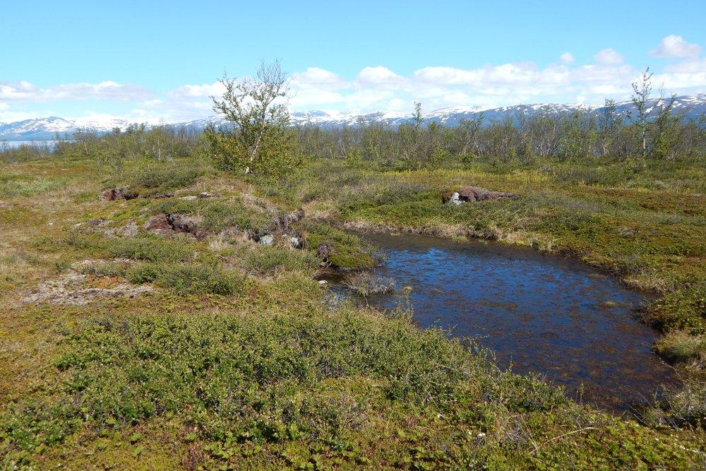Permafrost_thaw_pond_Abisko 1200x800.jpg