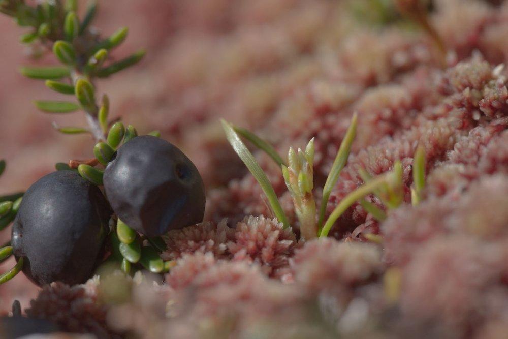 Seedling Ive van Krunkelsven.jpg