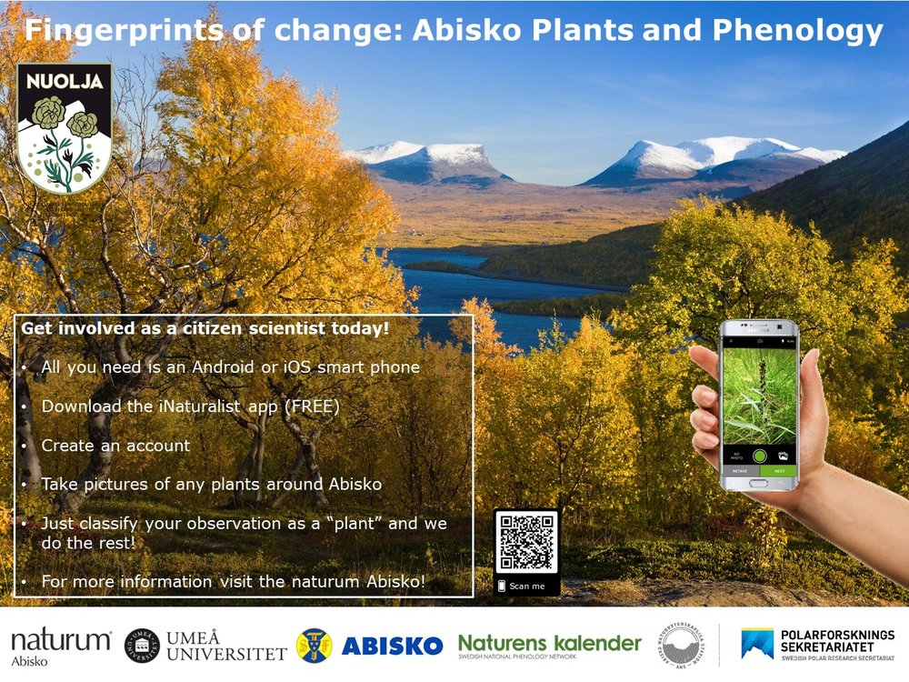 Abisko Plant and Phenology iNaturalist poster 20180711.jpg