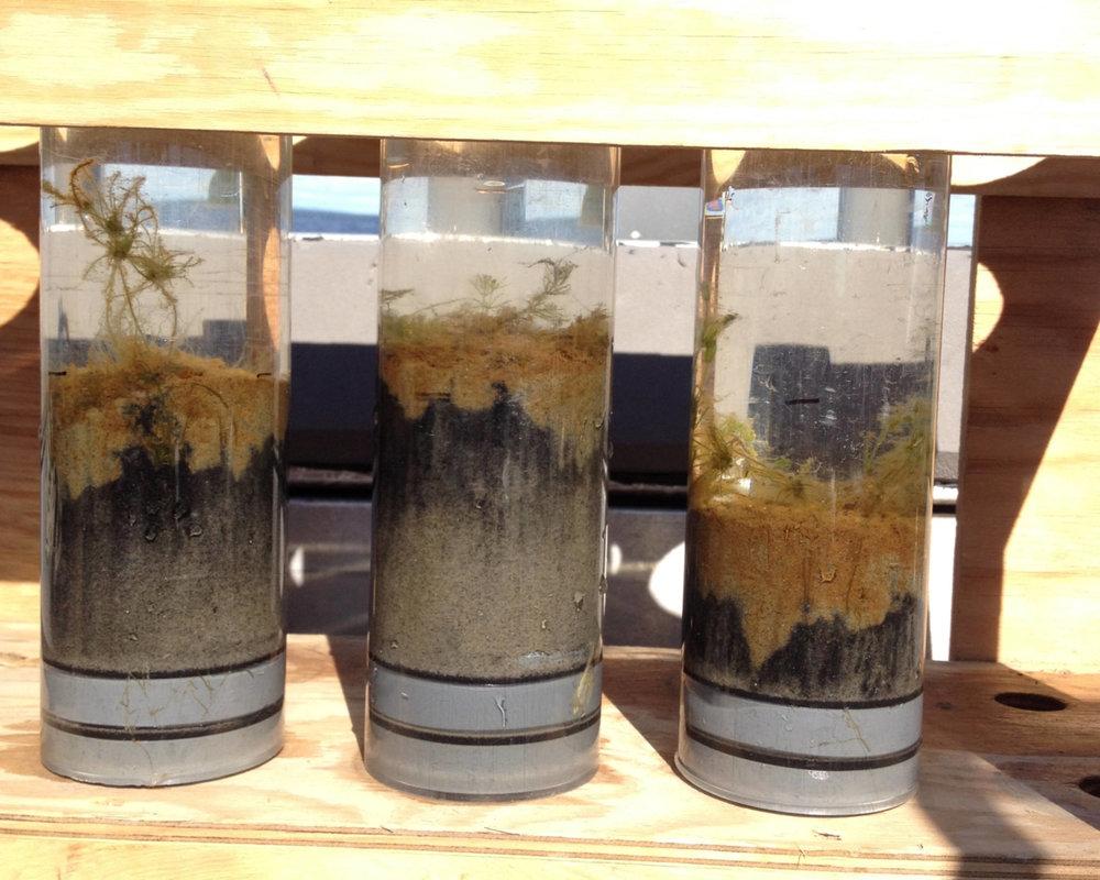 Coastal Benthic Algae