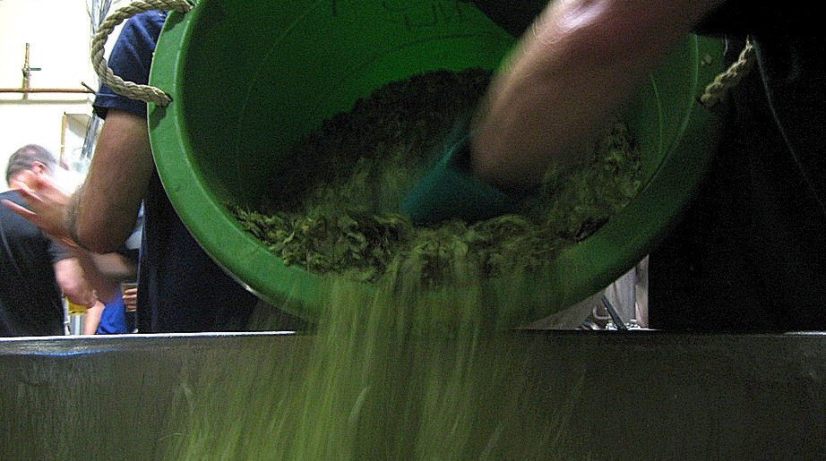 Like hops into cooling wort, so are the IPAs of our lives.