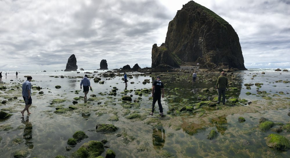 Haystack Rock. Nothing to do with beer, everything to do with Beervana in the summer.