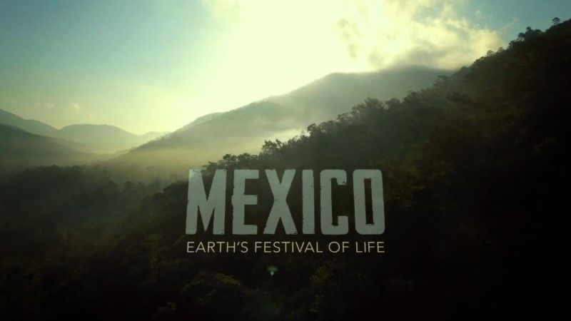 Mexico: Earths Festival Of Life - BBC2 - May 2017