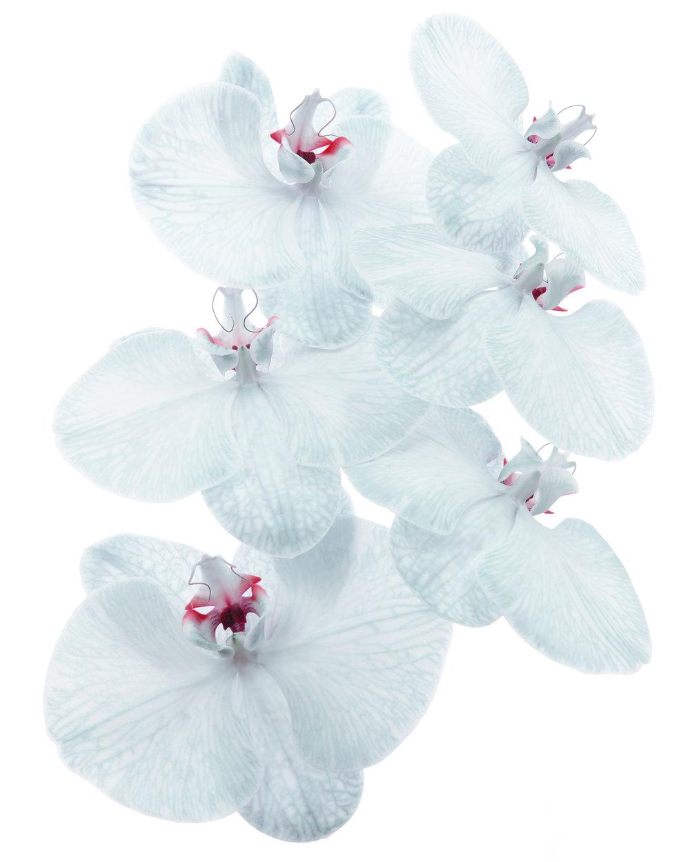 FLOWER_2.jpg