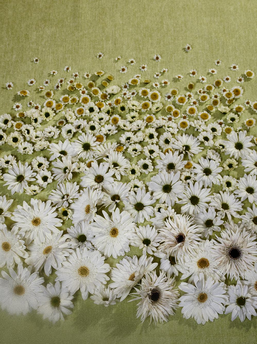 Tabletop Flowers-6225156-WA-1226-CMR.jpg