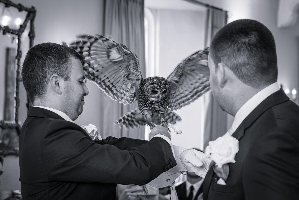 leeds-castle-owl-ring-bearer.jpg