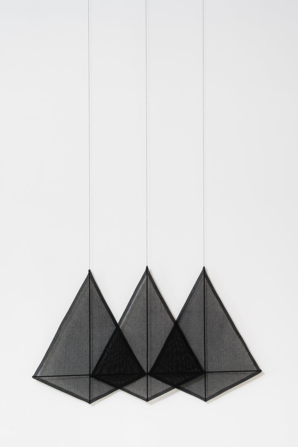 Black Kites, 2017