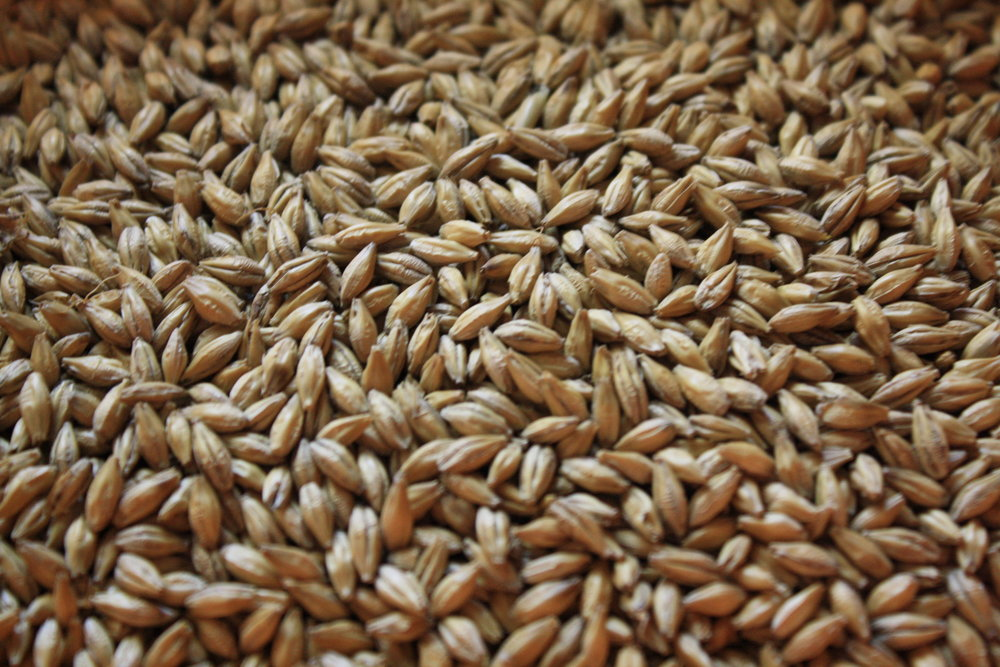 Smoked Malt can be used as a base malt due to the fact that the smoking process doesn't hurt the enzymes.