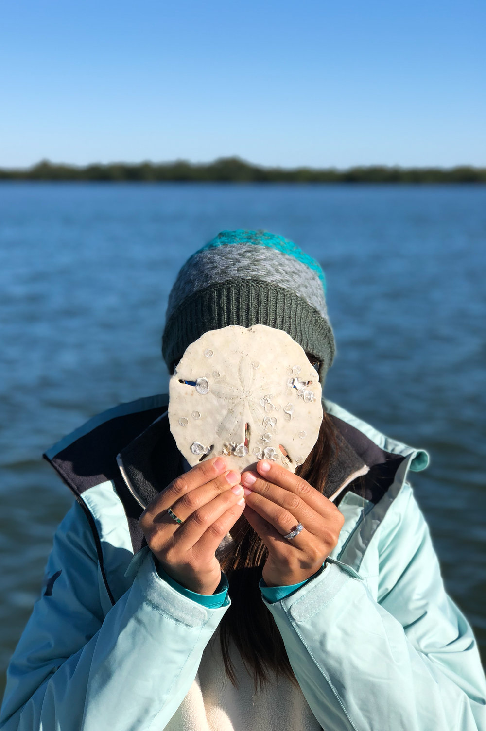 A sand dollar as large as your head!