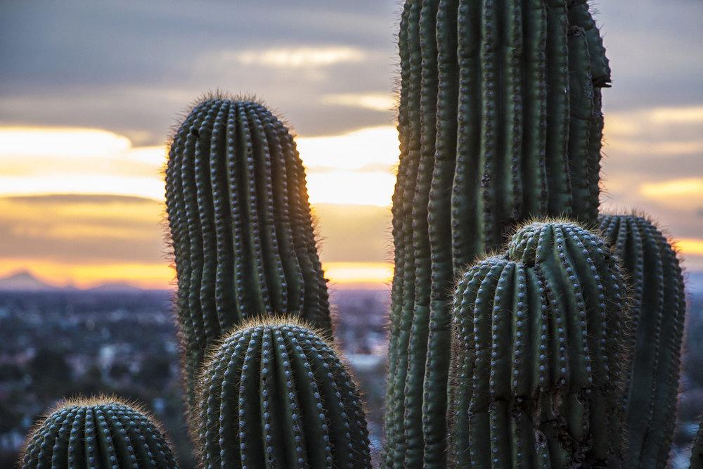 tucson-saguaro.jpg