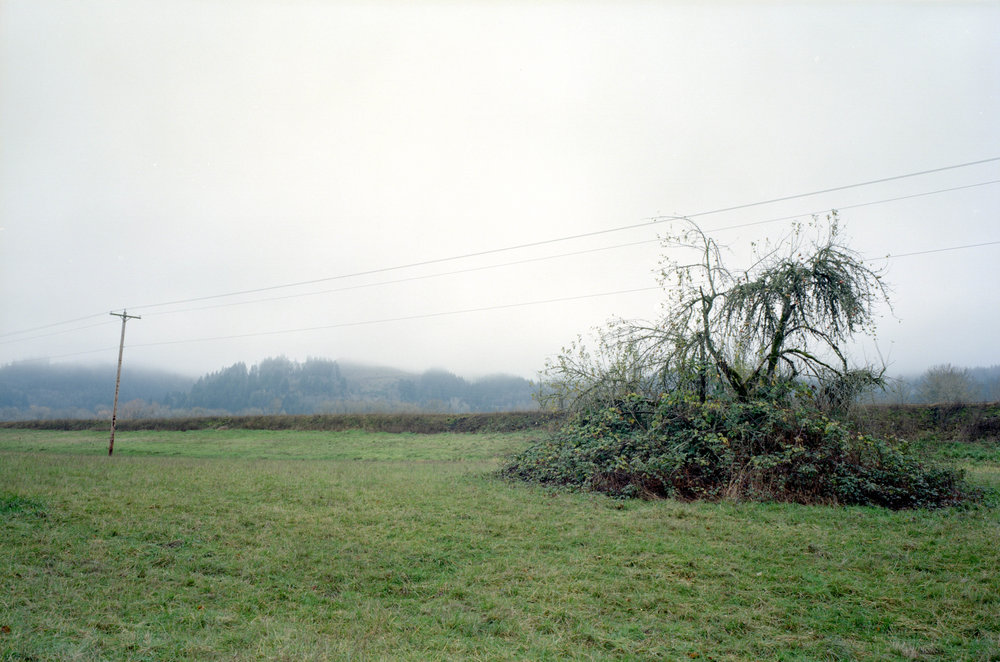 w69-002.pdx.sauvie.treepole.jpg