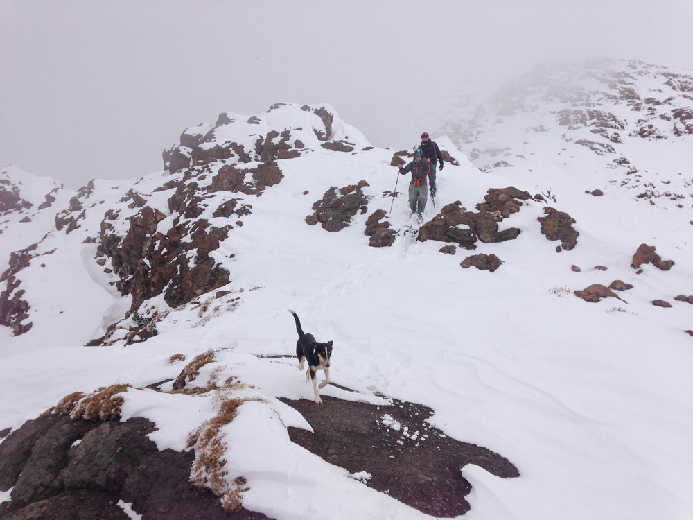 Picking our way through the fresh snow on the descent. Our mountain dog had no problems with his 4 legs!