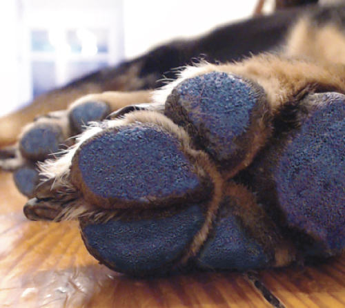 PawFriction - - Paw pad coating system designed to decreases sliding on smooth floors, increases mobility, and reduces risk of injury.- Can be ordered directly. Application assistance can be provided during therapy appointments.- Lasts approximately 7 days. Each kit comes with 2-4 applications.